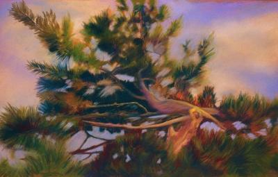 Old Pine Tip